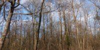 Forêt Chadieu
